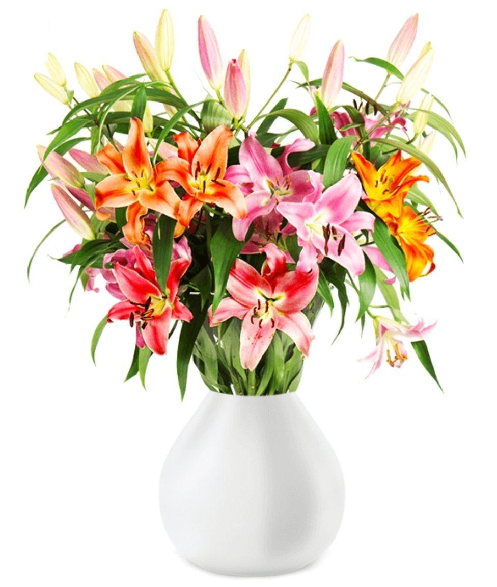 16 Lilien mit über 60 Blüten bei BlumeIdeal