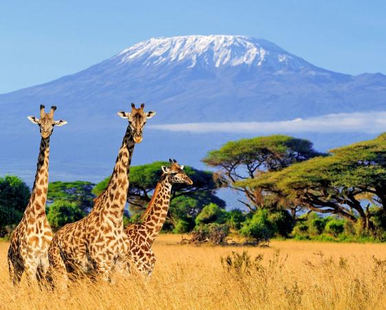 Flüge: Kenia / Tansania (Sept-Dez) Hin- und Rückflug von Hamburg, Frankfurt, Düsseldorf (...) nach Mombasa / Sansibar ab 336€ inkl Gepäck