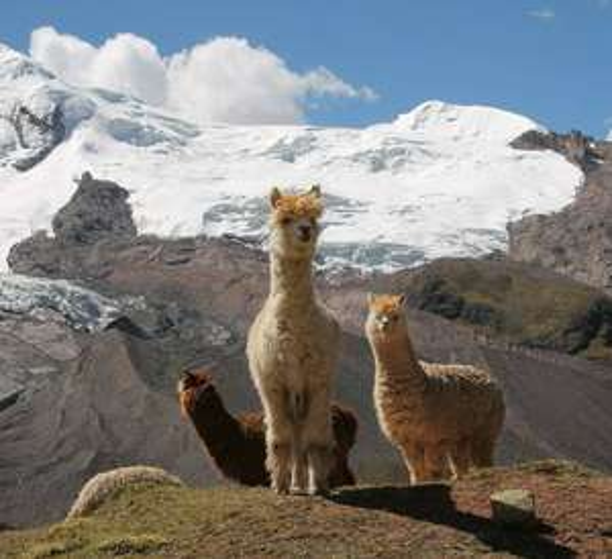Flüge: Peru (Nov-Feb) Hin- und Rückflug von Hamburg, Berlin, Düsseldorf und München nach Lima ab 404€