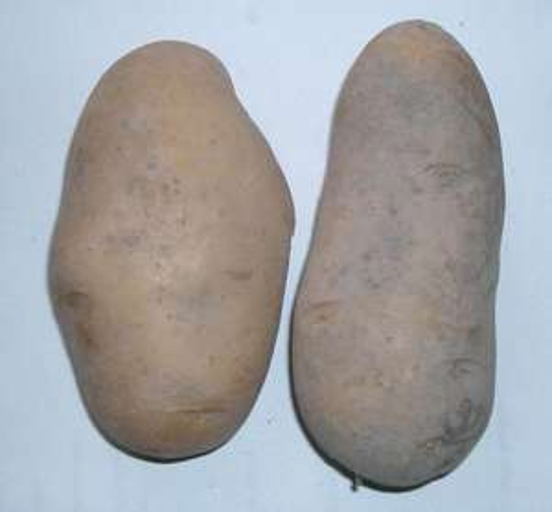 Toom: 10kg Kartoffeln / 2,49 Euro