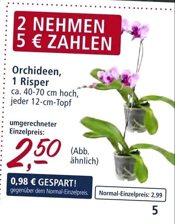 2 Orchideen für 5€