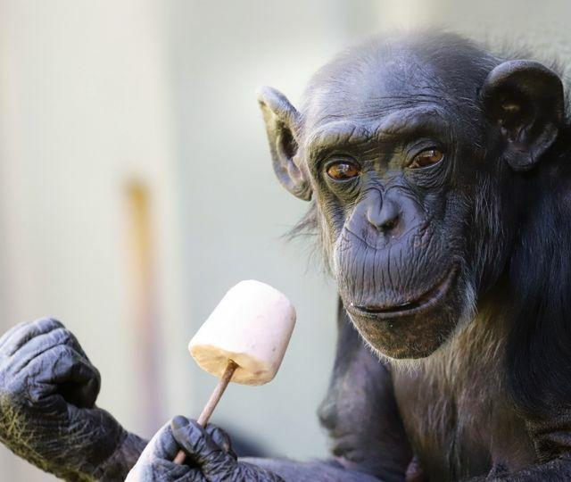 [lokal Karlsruhe] Zoo für KVV-Abonnenten eine Woche kostenlos (9.9.-15.9.2019)