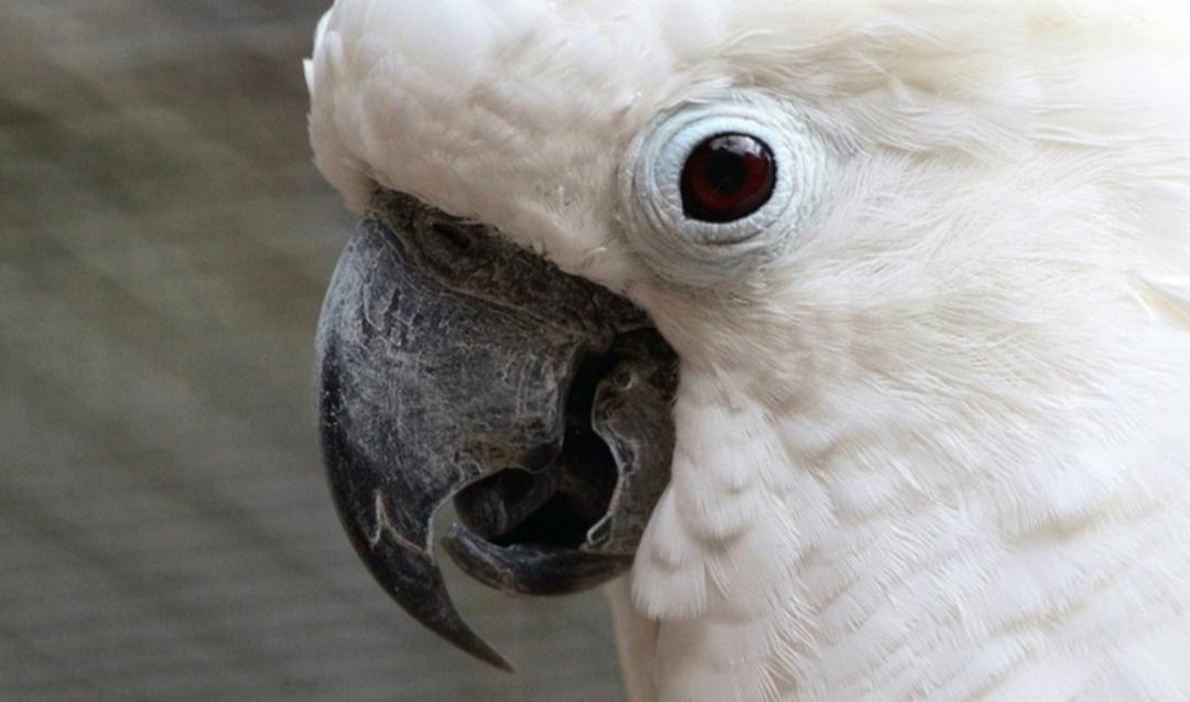 Solinger Vogel- und Tierpark Eintritt für 1 Familie  (1 Erwachsener und 1 Kind)