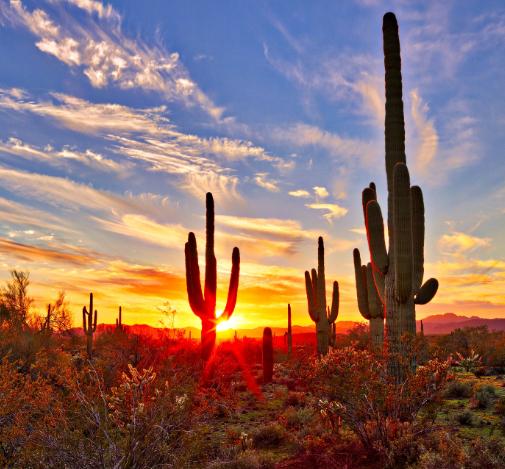 Flüge: Arizona / USA ( März-April ) Hin- und Rückflug von Hamburg, Frankfurt, München, Düsseldorf und Berlin nach Phoenix ab 270€
