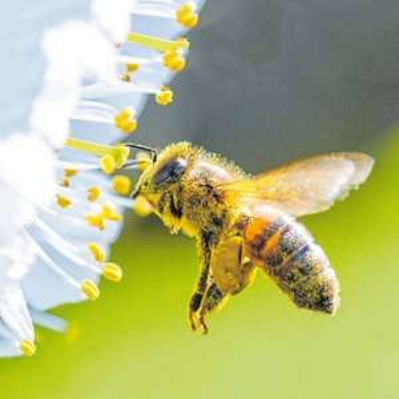Kostenlose Bienen-Umweltaktionstage für Schulklassen mit gratis Saatgutmischung