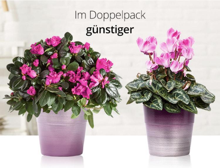 Pflanzen-Duo für nur 18,99 €, statt 25,98 € incl. Versand (-4,99€)