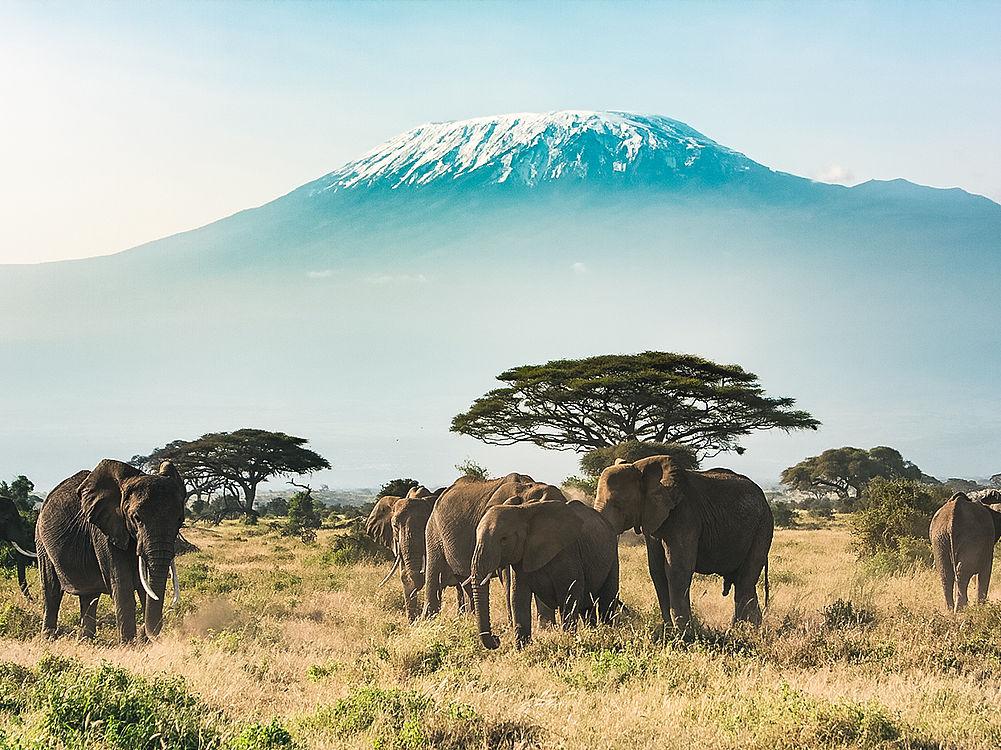 Flüge: Kenia / Uganda [Nov - Mai] Hin und Zurück von Straßburg, Köln, Stuttgart (...) nach Nairobi und Entebbe ab nur 320€ inkl. 30kg Gepäck
