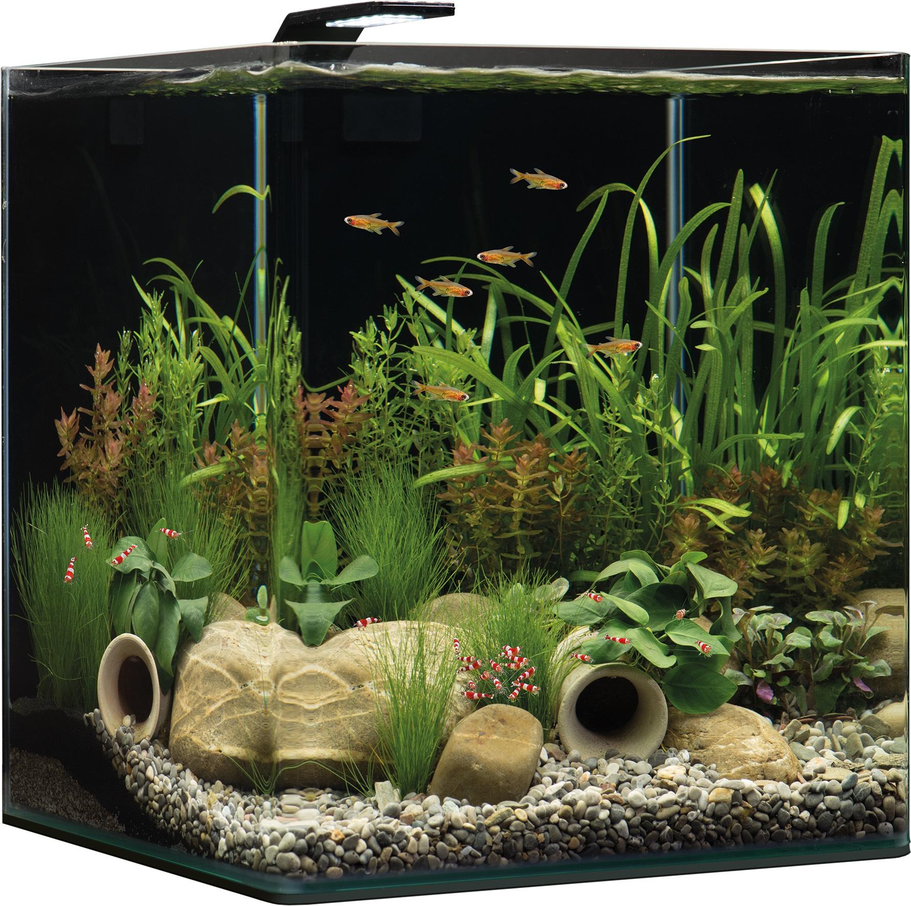 Dennerle NanoCube Basic, 60L ( Aquarium )