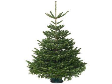 [LOKAL Raum Bremen]: KNALLER: Weihnachtsbaum Tannenbaum (Nordmanntanne) kostenlos bzw. gegen Gutschein