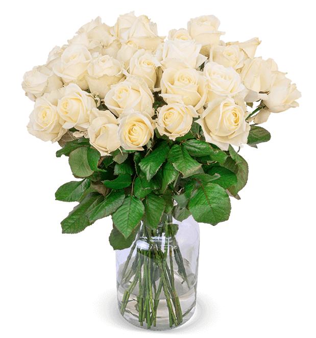 33 weiße Premium-Rosen