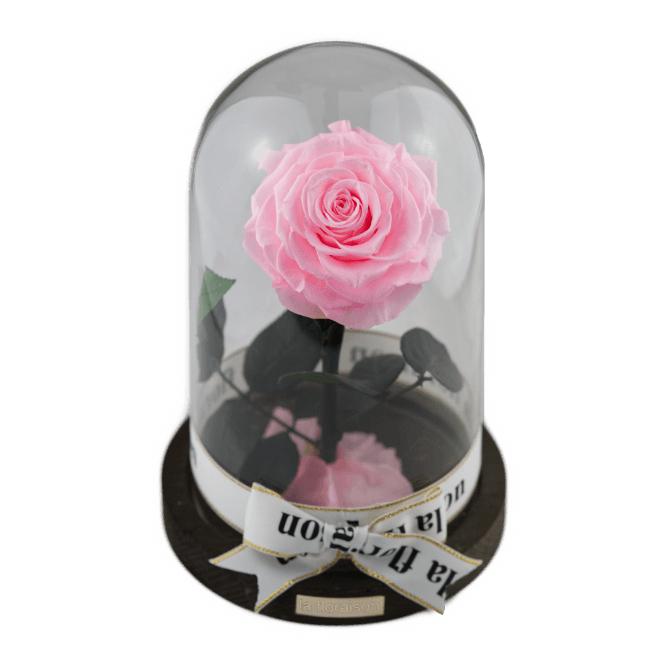 Infinity Rose im Glas für 47,96€. Weitere Angebote bis 30% vorhanden. (Auch Rosenboxen)