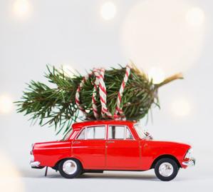 Gratis Tannenbaum im Wert von 25€ in einem von über 320 toom Baumärkten!