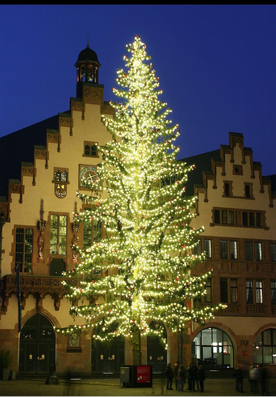 Berlin: Kostenlose Weihnachtsbäume