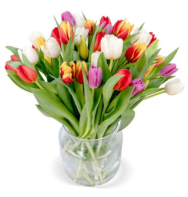44 bunte Tulpen bei Blume Ideal für 22,98€ inkl. Versand
