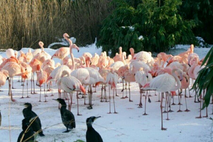 Eintritt Zoo Hannover für 7.92€ statt 15.5 €und Kinder 5.20€ Statt 11.50 €