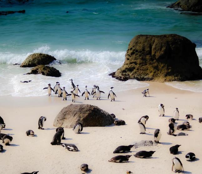 Flüge: Kapstadt / Südafrika (April-Dez inkl. Sommerferien) Hin- und Rückflug mit Qatar Airways von Berlin ab 452€