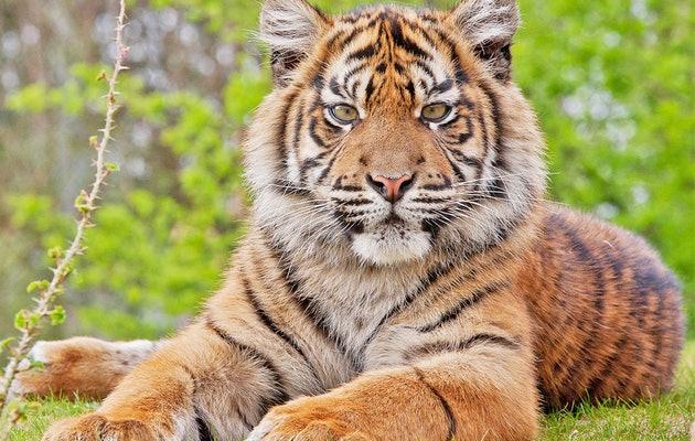 Königlicher Bugers' Zoo (NL)