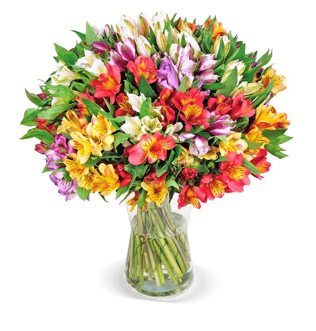 44 Inkalilien mit bis zu 400 Blüten