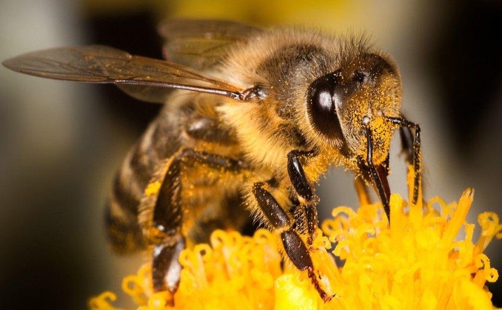 Bienen-Saatgut - Wildblumenmischung gratis