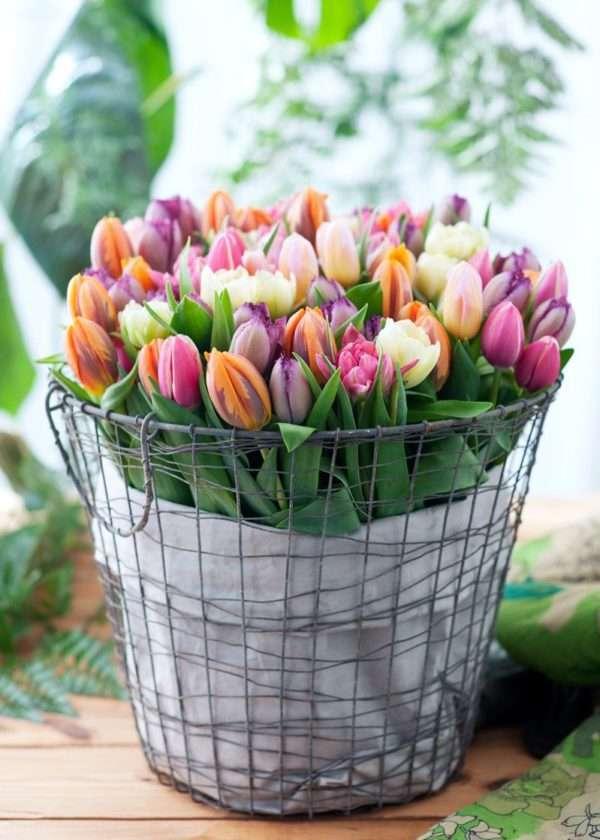 50 Tulpen bunt gemischt für nur 14,95€ + 4,90€ VSK - weitere Mengenrabatte möglich