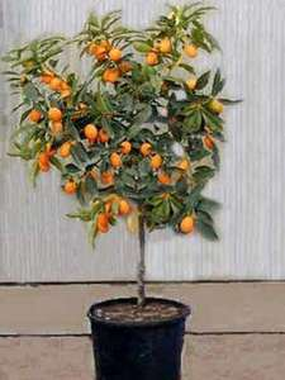 [IKEA] Weihnachtsbaum raus – CITRUS rein