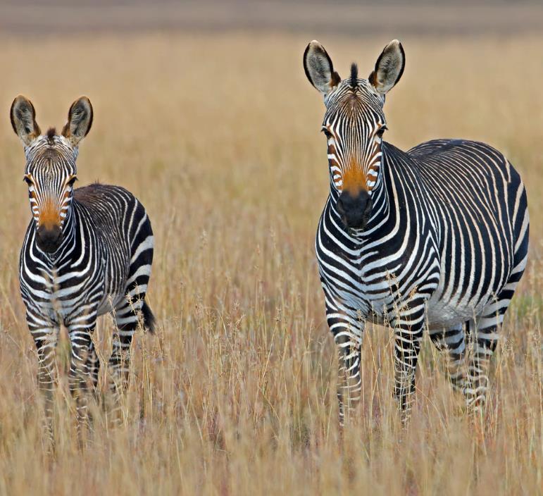 Dokumentation: Wildes Südafrika - Kostenlos im Stream