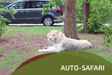 Auto-Safari im Safaripark Stukenbrock - kleines Urlaubsgefühl in Corana-Zeiten pro Auto nur