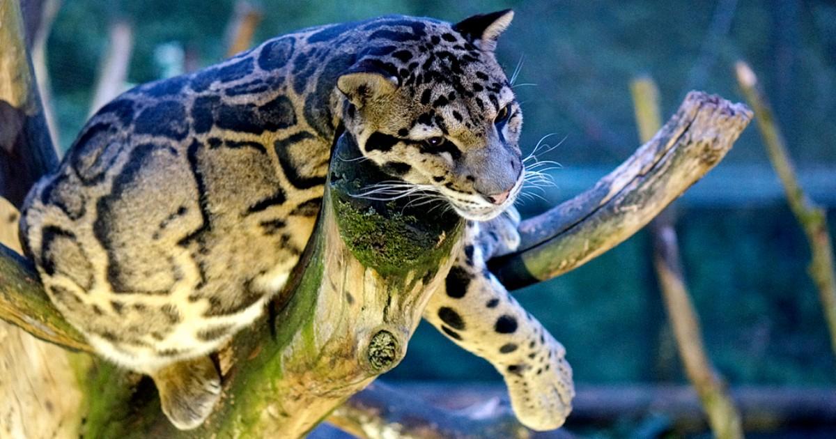 Zoo Dortmund: 50% Rabatt auf den Eintritt