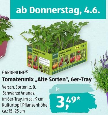 [ALDI-Süd] Tomatenpflanzen Alte Sorte 6 Stück