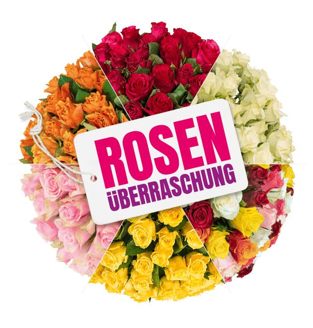 40 Stück Rosenüberraschung (40 in rot, weiß, gelb, orange, pink oder bunt), 50cm Länge