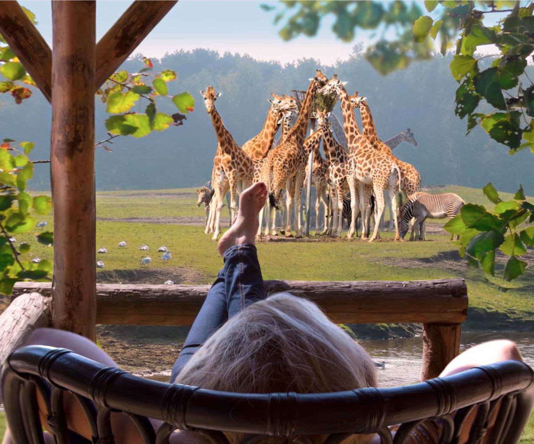 Holland: Sommer & Safari in Beekse Bergen: 2 Nächte im 4*Hotel inkl. Frühstück und Tages-Eintritt / Kinderpreise / Juni - Dezember