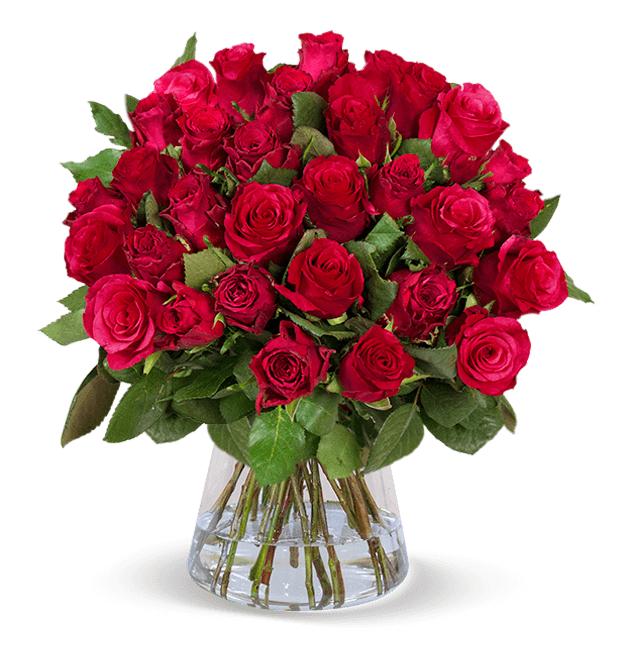 """33 rote Rosen """"ClassicRed"""" - Blumenstrauß mit 50cm Stiellänge"""