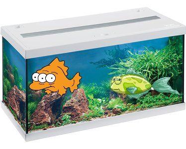 Eheim Aquarium-Set Aquastar LED schwarz oder weiß 54 l, Kölle-Zoo