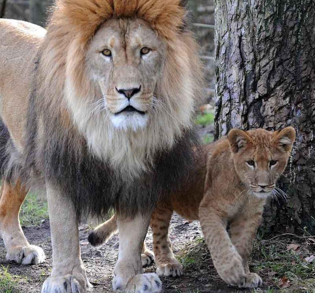 Freier Eintritt am 22.07.2020 für alle Kinder aus MV in die Zoos
