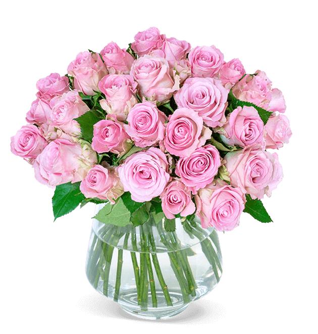 35 Rosen PinkDiamond für 19,99€