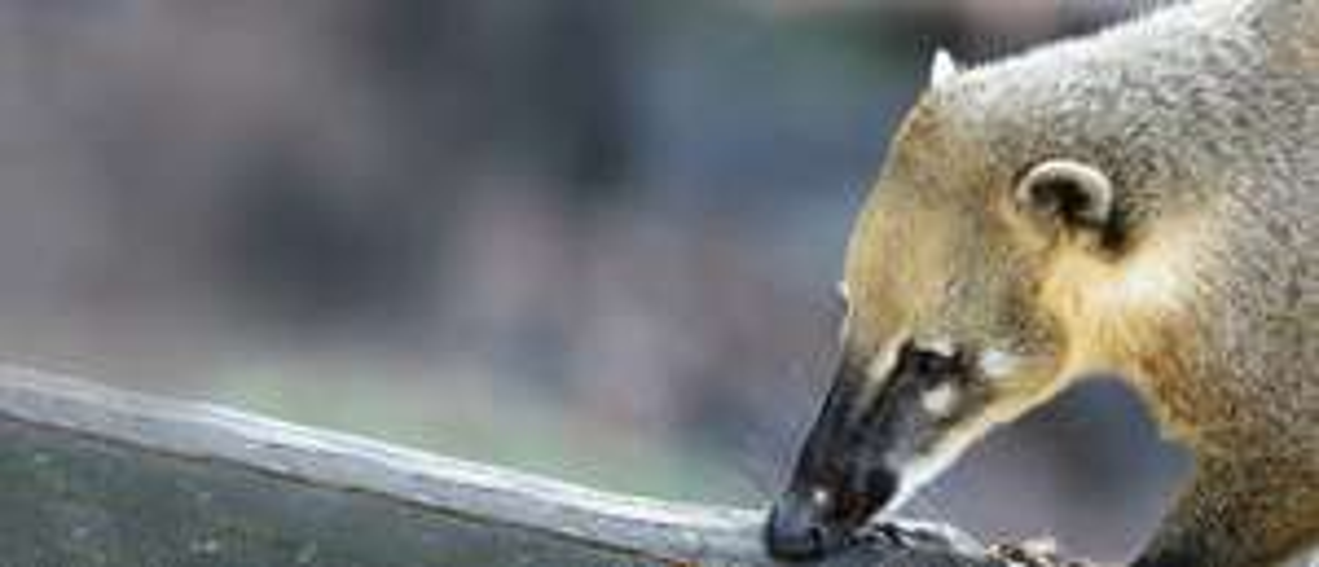 Gratis in den Zoo Karlsruhe für KVV-Abokunden