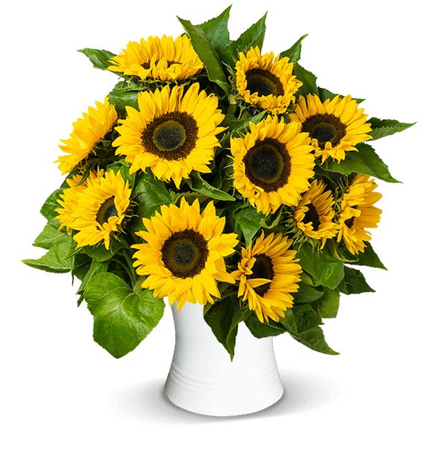 20 Sonnenblumen mit großen Blütenköpfen, 50cm Länge und inkl. Versand