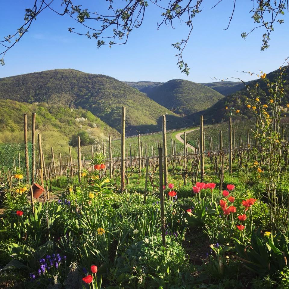 Weinbaugebiet Ahrtal: 4*SETA Hotel Bad Neuenahr - Doppelzimmer inkl. Frühstück, Sauna / Oktober bis Dezember