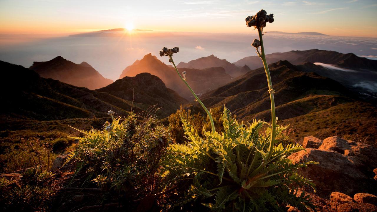 Die Kanarischen Inseln - im Stream