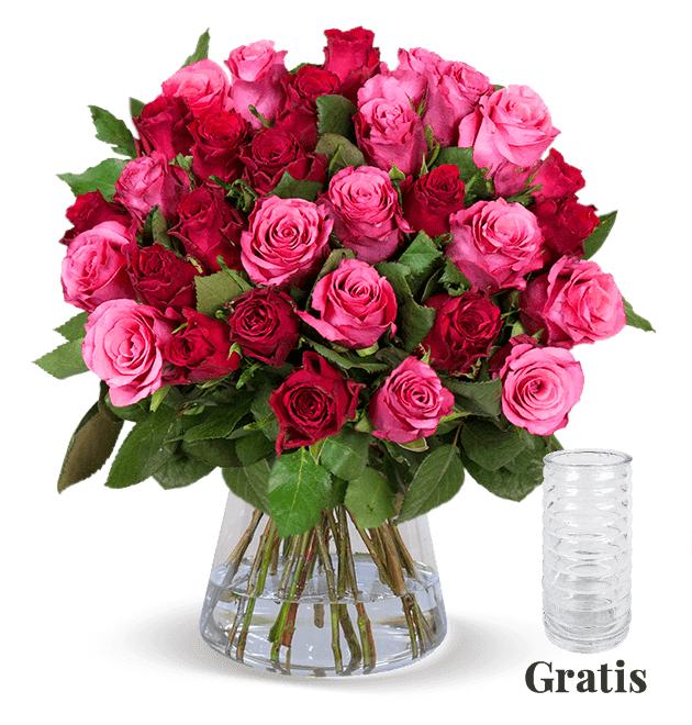 25 rot-pinke Rosen inkl. GRATIS Vase und Versand