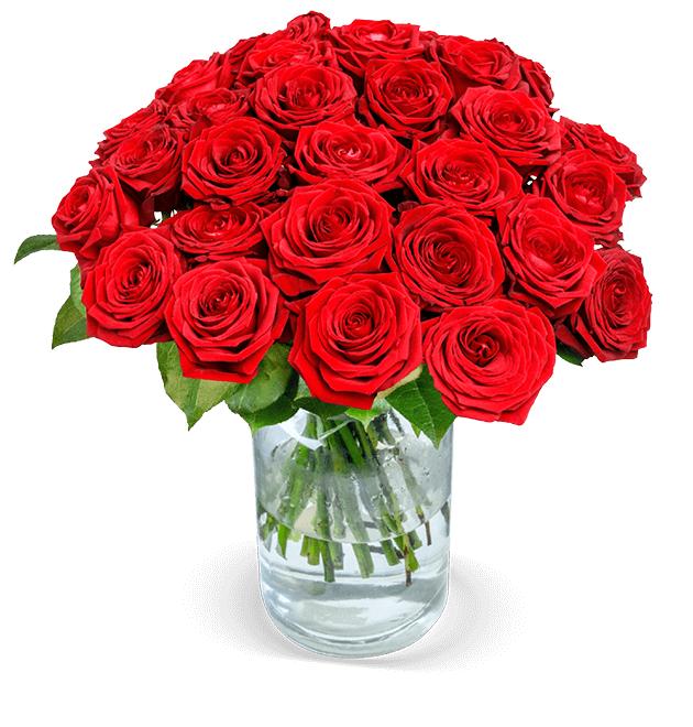 24 Red Naomi Rosen (XXL Blüten) - 80 Blütenblätter pro Stiel, 50cm Länge