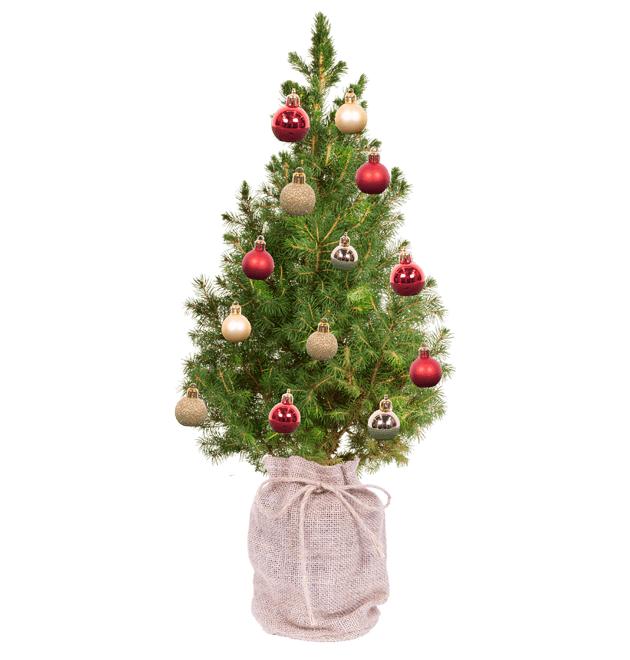 Weihnachtsdeko: Zuckerhutfichte inkl. Jutesack und 18 Kugeln (inkl. Versand)