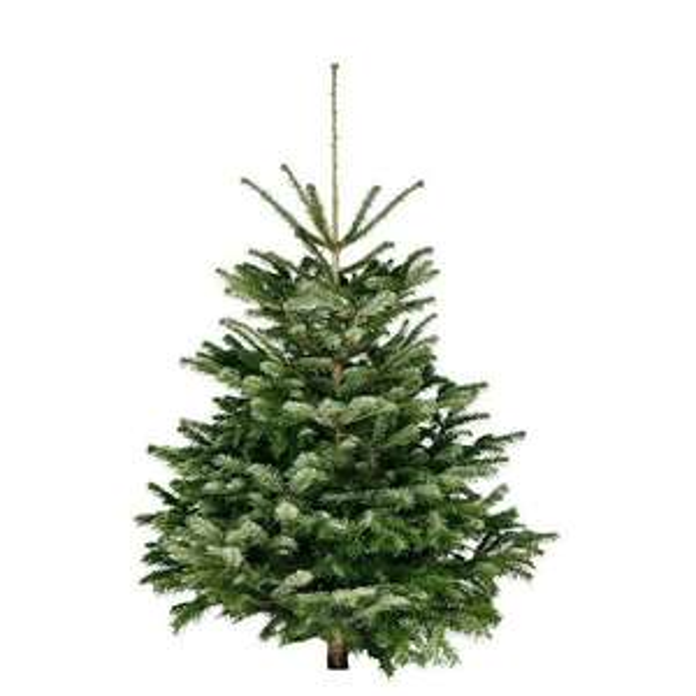 Bauhaus Baumarkt - gesägte Weihnachtsbäume (Bio-) oder einfach nur Nordmanntanne (inkl. 4€ GS ab 17,95€)