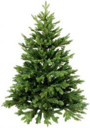 [B+DD+M+HH+H] Durstexpress: Nordmanntanne/Weihnachtstanne/Weihnachtsbaum (Global GAP) 1,4-1,6m für 19,61€ o.1,7-1,9m für 29,42€ frei Wohnung