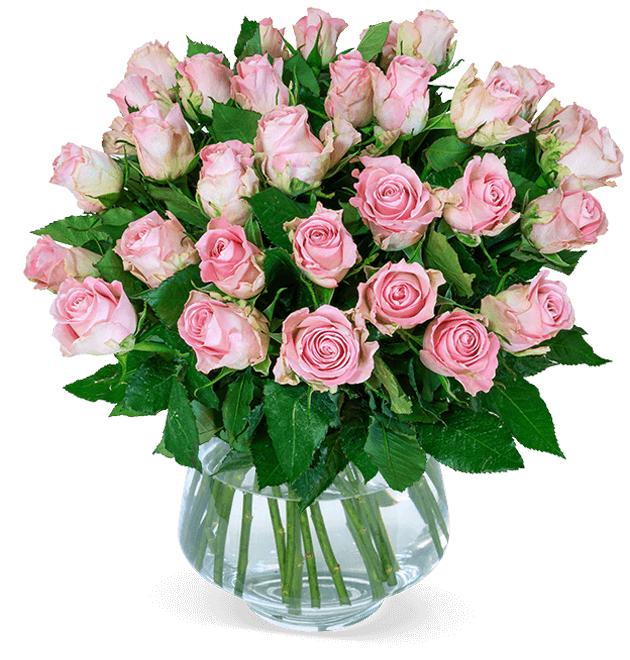 40 roséfarbene Rosen (50cm Länge, 7-Tage-Frischegarantie) für 25,98€