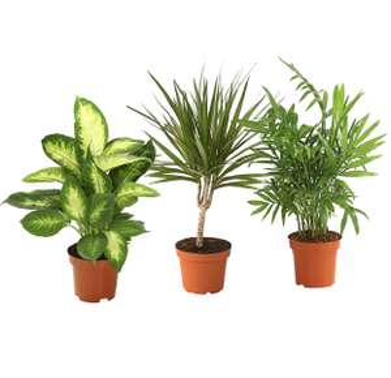 Bis zu 50% auf Weihnachtsartikel & Pflanzen* - in allen Dehner Märkten