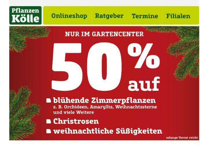 50% auf blühende Zimmerpflanzen,Christrosenundweihnachtliche Süßigkeiten bei Pflanzen Kölle