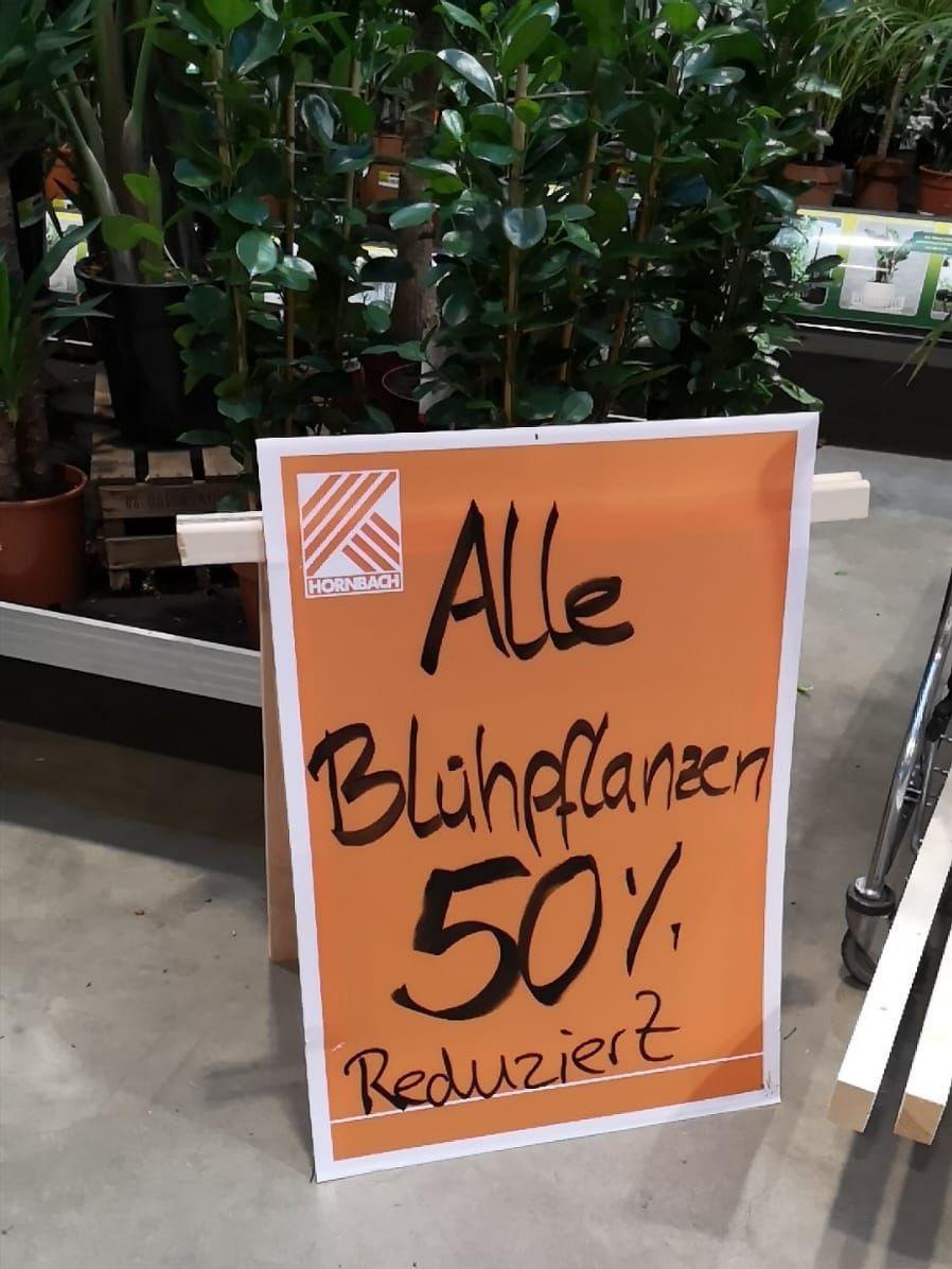 Hornbach deutschlandweit: alle Blühpflanzen 50%