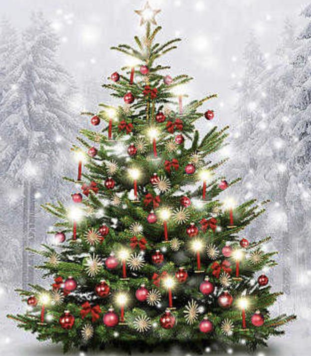 Lokal BaWü Herbolzheim: Kostenlose Weihnachtsbäume aus dem Europa-Park ab Montag 21.12. - ggf. Spende für Tierheim