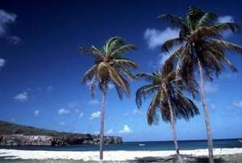 8 Tage Curaçao incl. Flug und Hotel für 521 Euro